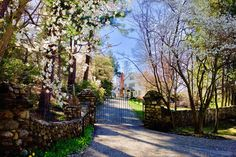 Great little metal gate with basket finials and high arch for a narrow driveway. Gates by Tri State Gate, Bedford Hills, NY. Wrought Iron Driveway Gates, Iron Gates, Bedford Hills, Tri State Area, Entry Gates, Gate Design, Arch, Basket