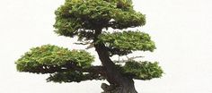 U.S. National Arboretum's Bonsai & Penjing Museum has bonsais up to 400 years old.
