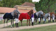 LE SCAN SPORT - Les finales des jeunes chevaux à Uzès (Gard) ont entraîné une flambée des achats...
