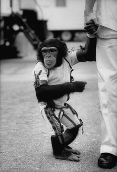 Astrochimps: Early Stars of the Space Race Nasa Space Program, Monkey Mind, Arms Race, Space Cowboys, Space Race, People Of Interest, Interesting History, Space Exploration, Best Photographers