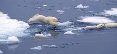 How Your Class Can Help | Polar Bears International