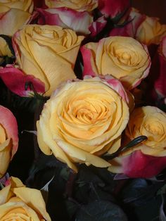 Find more bicolors roses in our website