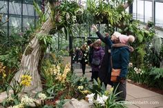 From Saturday the February until Sunday the March The Royal Botanic Gardens, Kew are hosting their Orchid Extravaganza! This year, Kew Kew Gardens, Botanical Gardens, Stuff To Do, Things To Do, Winter Garden, Days Out, Surrey, Gardening Tips, The Good Place