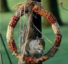 Autumn Wreath made from Indian Corn - the squirrels and the birds will love you for it!