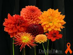The WSDOT Worker Memorial Collection in honor of Aimees' father Growing Dahlias, Farm Gardens, Bud, Wedding Planning, Memories, Floral, Flowers, Plants, Backyard Ideas