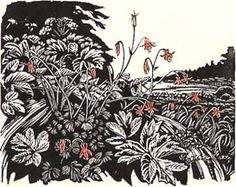 Rebecca Poulson. Columbine (wood engraving)