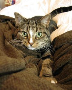 Today / Me - Tabby Cat - Ideas of Tabby Cat - Today / Me The post Today / Me appeared first on Cat Gig. Like Animals, Animals And Pets, Funny Animals, Cute Cats, Funny Cats, Neko Cat, Kitten Love, Cat Boarding, Cats And Kittens