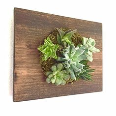 Custom Color Circle Shaped Succulent + Cacti Vertical Garden || Living Wall || Wall Planter || Hanging Planter