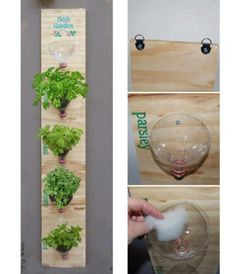 DIY Bottle Herb Garden Pictures, Photos, and Images Diy Bottle, Recycle Plastic Bottles, Plastic Recycling, Recycled Bottles, Empty Bottles, Soda Bottles, Wine Bottles, Balcony Herb Gardens, Garden Projects
