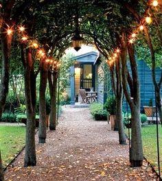 solar lights hanging in big backyard trees would be beautiful
