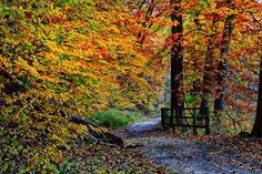 Fall Walking -HSS