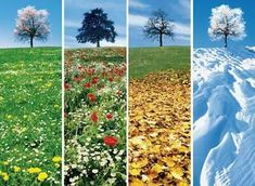 Changing Seasons Changing seasons are our guide to change, Dynamism conquering the static boredom. Four Seasons Art, Seasons Of The Year, Weather Seasons, Science And Nature, Autumn Summer, Fall Winter, Beautiful Landscapes, Montessori, Plants