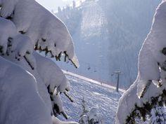 All you need is #snow!  #Winter #panorama #snow #sun #Trentino