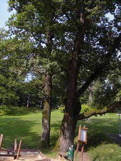 #magiaswiat #podróż #zwiedzanie #polska #blog #europa #jaworze #park #amfiteatr # teznie # fontanna #ławeczka Amalfi, Trunks, Park, Plants, Blog, Europe, Drift Wood, Tree Trunks, Parks