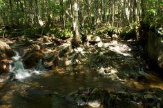 Fôret/ruisseau