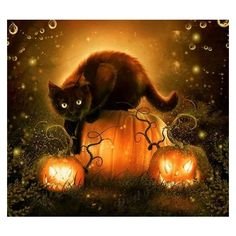 Halloween cat print ❤ liked on Polyvore featuring home, home decor, wall art, halloween wall art and halloween home decor