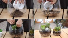 Here's a home decor DIY for making your own modern terrarium using a glass bowl that lets you show off your plants and see the layers of rocks, soil and moss. Terrarium Diy, Hanging Terrarium, Succulent Bowls, Succulent Arrangements, Pots, Succulent Landscaping, Dinner Recipes For Kids, Water Plants, Indoor Plants