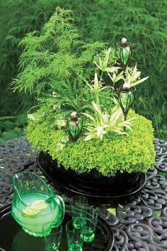 Japanese maple, Umbrella grass, Hosta, Club moss, English ivy, Button fern