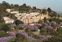 The Westcliff, Johannesburg, South Africa