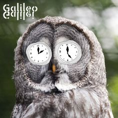 Artist: Galileo Galilei Song: 4 Album: Sayonara Frontier Track: 02 i do not own this song Japanese Artists, In My Feelings, Music Bands, Owl, Bird, Animals, Animales, Animaux, Owls