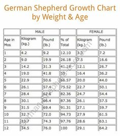 Male  Female German Shepherd Growth Chart  Dogs