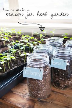 DIY Mason Jar Herb Garden-this lady was able to grow her own herbs indoors, even using a north facing window. She just had the soil line at the right height for a terranium effect. Have to watch how much you water though as it can get root rot. Mason Jar Herbs, Mason Jar Herb Garden, Mason Jars, Container Gardening, Gardening Tips, Indoor Gardening, Organic Gardening, Herbs Indoors, Growing Herbs