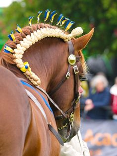 A completely different braid...the mane is not the focus. This is a Suffolk Punch draft horse.