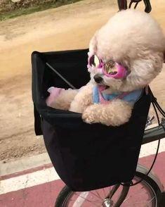 Super Cute Puppies, Cute Baby Dogs, Cute Little Puppies, Cute Funny Dogs, Cute Dogs And Puppies, Cute Little Animals, Cute Funny Animals, Baby Animals Super Cute, Puppies Puppies