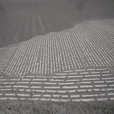 Available for sale from Chambers Fine Art, Taca Sui, Odes of Chen I - Fields on the Outskirts Silver gelatin print, 19 × 19 in Chinese American, Zoom Photo, Foto Art, Patterns In Nature, Shades Of Grey, Chen, Street Photography, Outdoor Blanket, Artsy