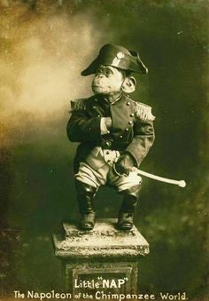 1915: The Napoleon of the Chimps, named Little Nap.