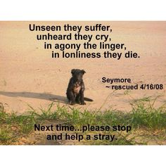 Please do the right thing.    Unseen they suffer,    unheard they cry,    in agony they linger,    in lonliness they die.    Next time, PLEASE stop and help a stray.