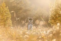 Drei erfolgreiche Schweizer Tierfotografen verraten uns, was sie an der Tierfotografie fasziniert und wie sie dazu gekommen sind.