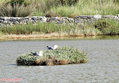 Αρχική σελίδα Samos, Bird, Animals, Animaux, Animales, Birds, Animal, Dieren