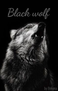 Pin By Summer Roberson On Wolves Wolf Wallpaper Wolf Animals