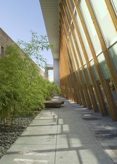 University of Arizona Poetry Center / Line and Space (10)