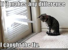 if you have a cat. you know this is so truee.!     Myne moves them just so they can peak outside.! hahaha