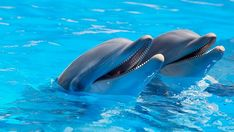 Animales, Lindo, Delfines, Peces