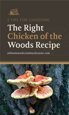 When you have Chicken of the Woods mushrooms in your pantry, you can easily enjoy different recipes that will bring out this variant's rich flavor. The key is to know how to best cook them. So to help you narrow down your choices, check out these 3 tops for choosing the right chicken of the woods recipe to make the most out of these tasty mushrooms.   Discover more about medicinal mushrooms at ultimatemedicinalmushrooms.com #cookingmushrooms #mushroomrecipeideas #medicinalmushroom Chinese Mushroom Chicken Recipe, Easy Mushroom Soup, Chinese Mushrooms, Mushroom Gravy, Edible Wild Mushrooms, How To Cook Mushrooms, Growing Mushrooms, Sauteed Mushrooms, Chicken Of The Woods
