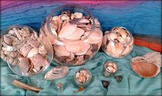 my seashells collection