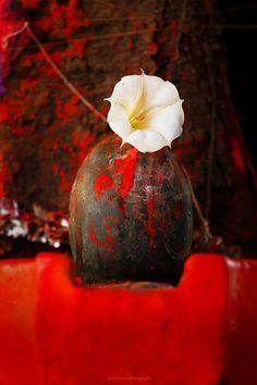 OM NAMO SHIVAY Tantric Yoga, Tantra, Om Namah Shivaya, Buddha Meditation, Shiva Shakti, Indian Gods, Visionary Art, Lord Shiva, Sacred Geometry