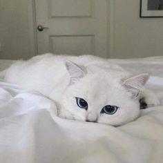 Imagem de cat, white, and animal