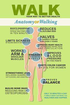 Anatomy of Walking From Leslie Sansone Walking For Health, Walking Exercise, Walking Workouts, Health Facts, Health And Nutrition, Health Tips, Health And Wellbeing, Health Benefits, Exercise Benefits