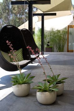 Grounded - Modern Landscape Architecture - modern - patio - san diego - by Grounded - Richard Risner RLA, ASLA-simple, neat potted plants. Papyrus like plant against background wall