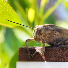 Usually when we are talking  about edible insects, we are talking about protein, even high protein content. Nobody talks about all other…