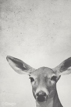 8x12 Doe; deer, fine art photography, woodland, nature, wildlife, taxidermy, natural history, hunting, women