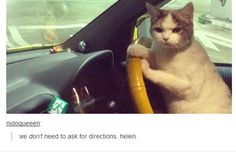 35 Hilarious Tumblr Posts That All Cat Owners Know To Be True (Slide #64) - Pawsome