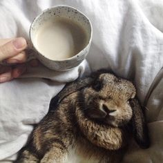Sweet Bunny and breakfast