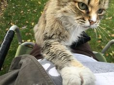 After sixteen years Cookie passed away yesterday. I loved her so much.   http://ift.tt/1QGVvE5 via /r/cats http://ift.tt/1Kr3GoI  cats funny pictures