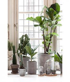planten | groen | bloempotten beton | concrete | green