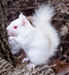 37-somptueux-animaux-albinos-que-la-nature-a-oublie-de-colorer2